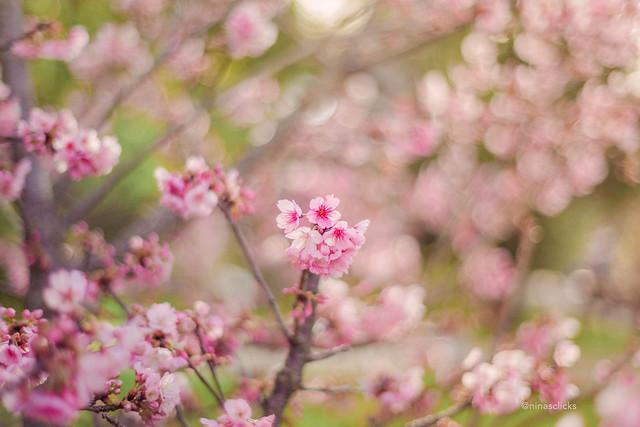 Spring promise