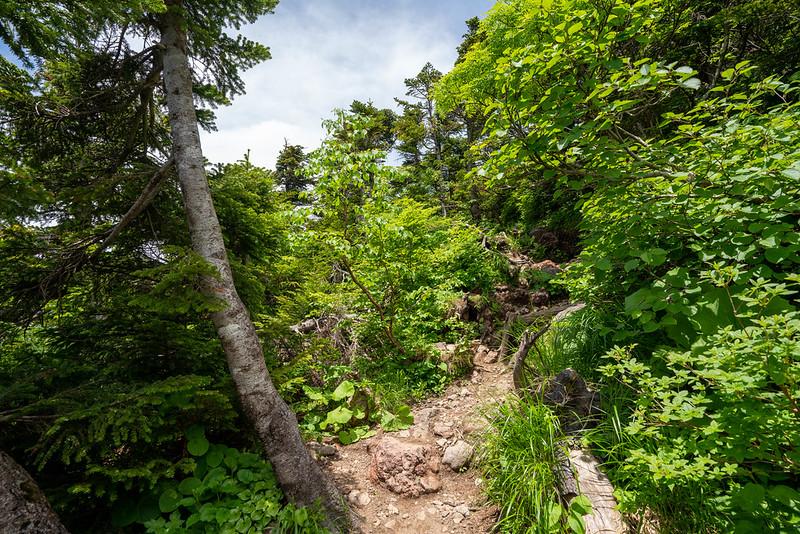 八甲田山 大岳に登る
