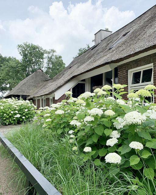 Rietgedekte boerderij siergras met witte hortensia's