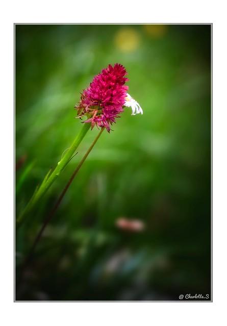 Une fleur peut en cacher une autre …