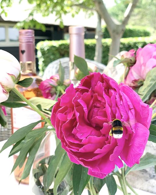 Roze bloem landelijke tuin