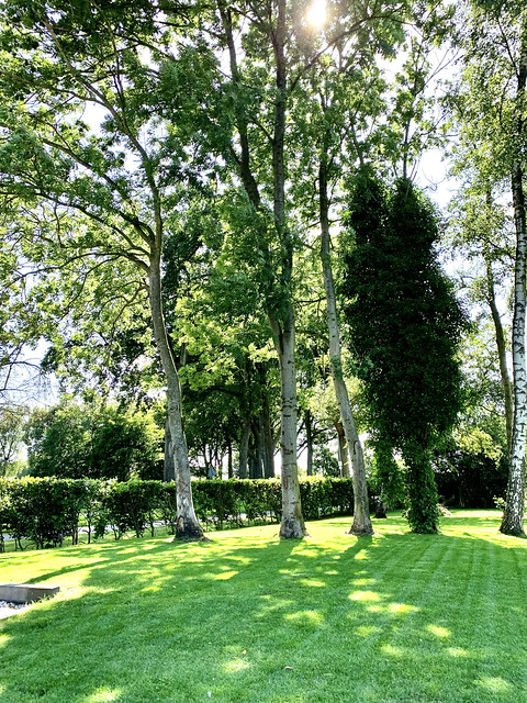 Bomen bos gazon boerderijtuin