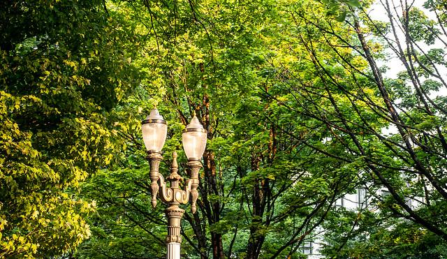 Street Light Among the Trees