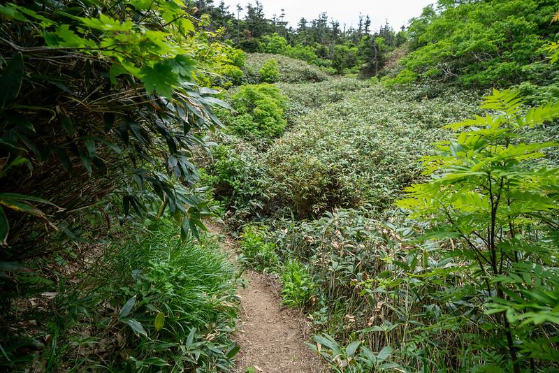 八甲田山の笹の登山道