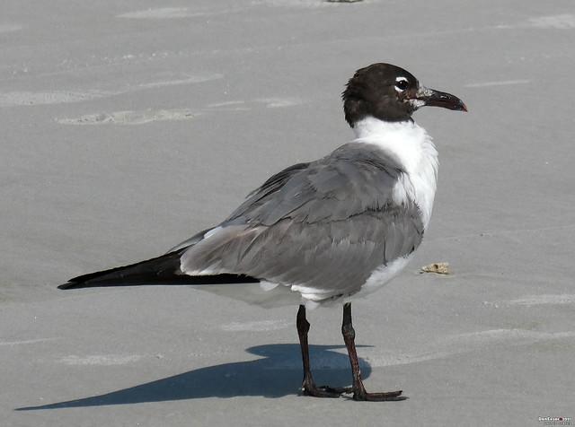 Jacksonville Beach, Florida, USA