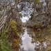 Yarra River Trail Kew 2021-08-04 (R5_99A1068)