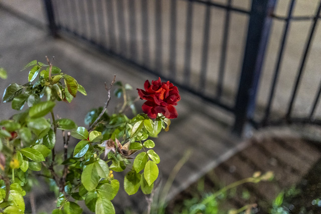 Rokinon/Samyang 45mm f/1.8