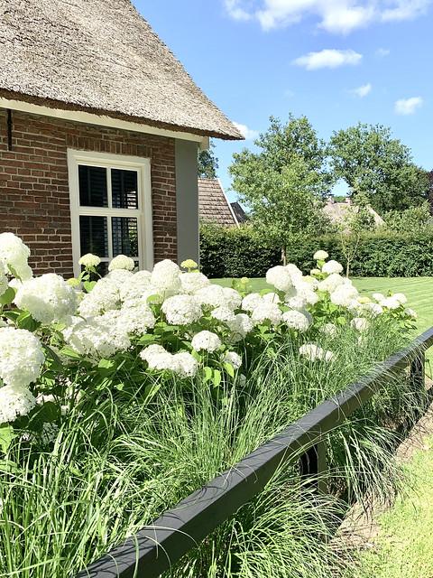 Witte hortensia's Annabelle met siergras