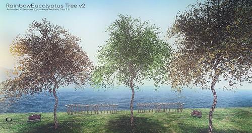 The Little Branch - Rainbow Eucalyptus.v2 - The Men's Department