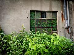Rural decay: plants growing inside