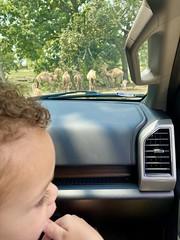 Trip to the safari