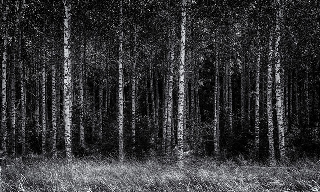 Eskilstuna woodland