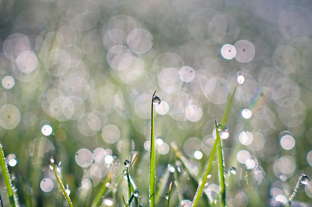 Droplets and bubbles
