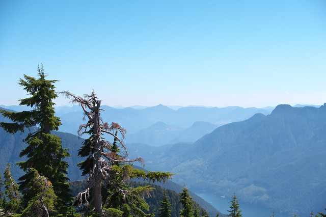 Trees of the Mountain Tops.