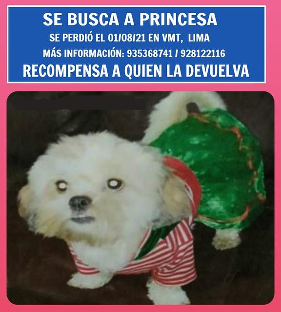 Se busca a Princesa, se perdió en Tablada de Lurín, VMT, Lima