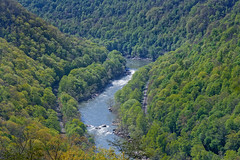 For While I Must Hurry Upon My Way, I Will Make the Time to Stop and See Things Wondrous (New River Gorge National Park & Preserve)