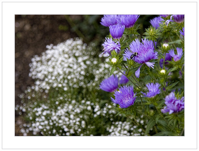 Visiting Hours At The Asters