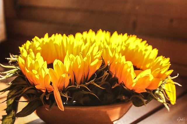 A Bowl of Sunshine