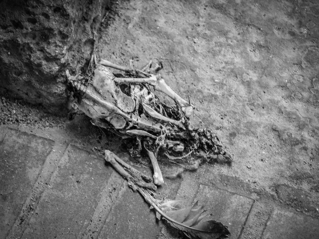Nature morte dans les rues de Sienne... 51359014439_9806bb4896_b
