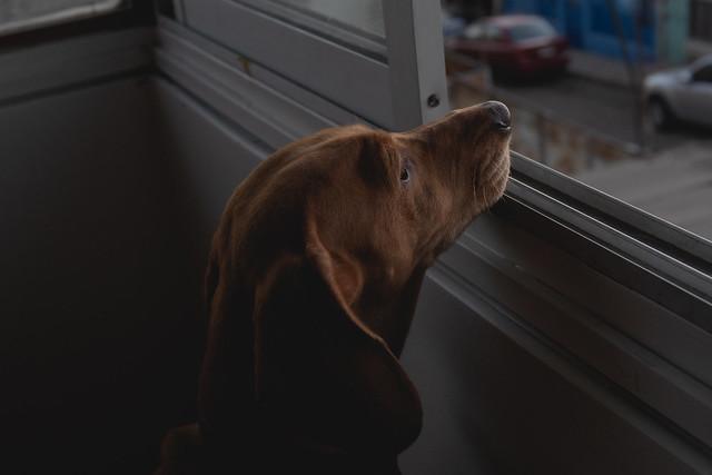 Espiando por la ventana
