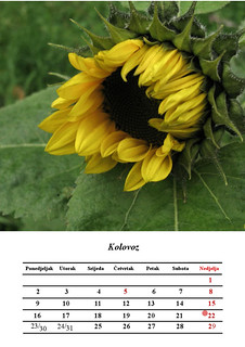 8 Kolovoz, August