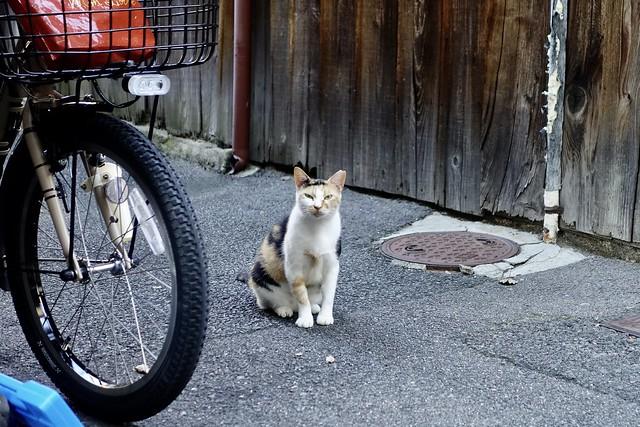 Today's Cat@2021−08−05