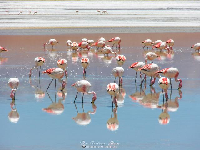 James's Flamingo 3