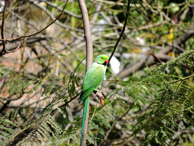 Amritsar Tour - Jallianwala Bagh (Wild Parrot)
