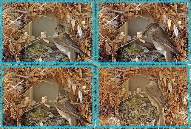 21382-85.Ansitzjäger baut Nest