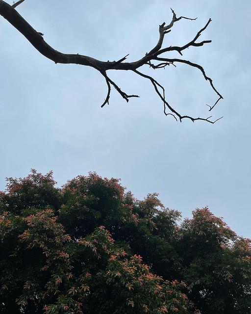 City Nature - Monsoon Blush, Pilkhan Trees