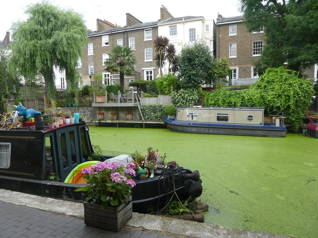 Algae on the Regent's Canal, London