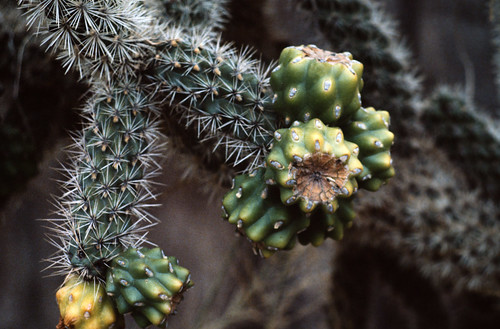 Cactus (6)