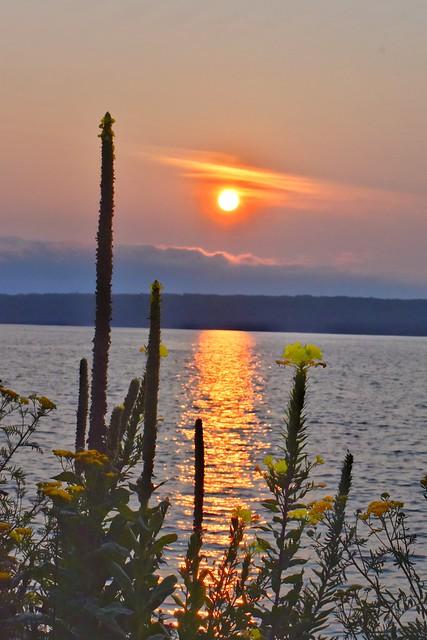 Evening Primrose in the Morning-Keweenaw Bay Sunrise
