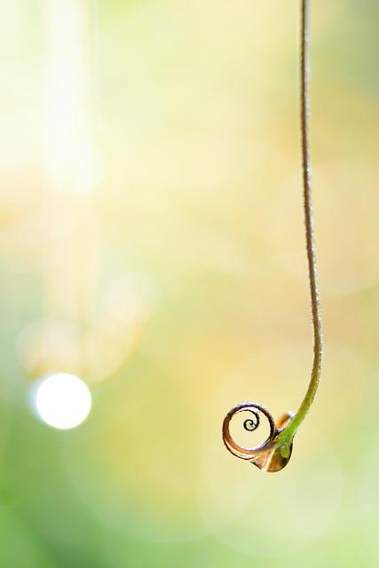 Jungle Jewel Spiral