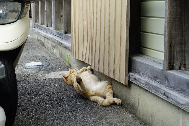 Today's Cat@2021−08−06