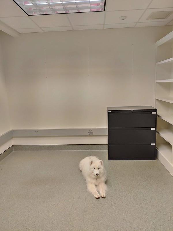 Removing Wall Shelves + Furniture, Spackling