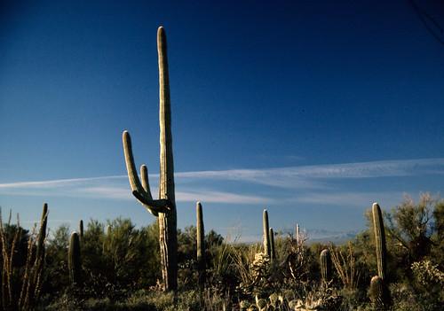 Saguaro National Monument (9)
