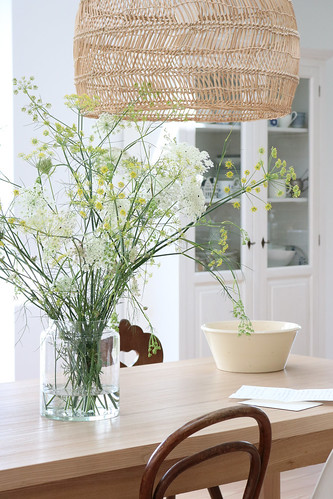 Fennel and Queen Anne´s Lace