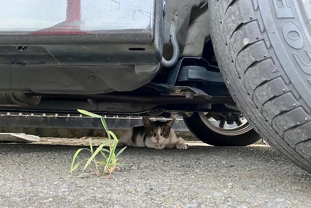 Today's Cat@2021−08−08