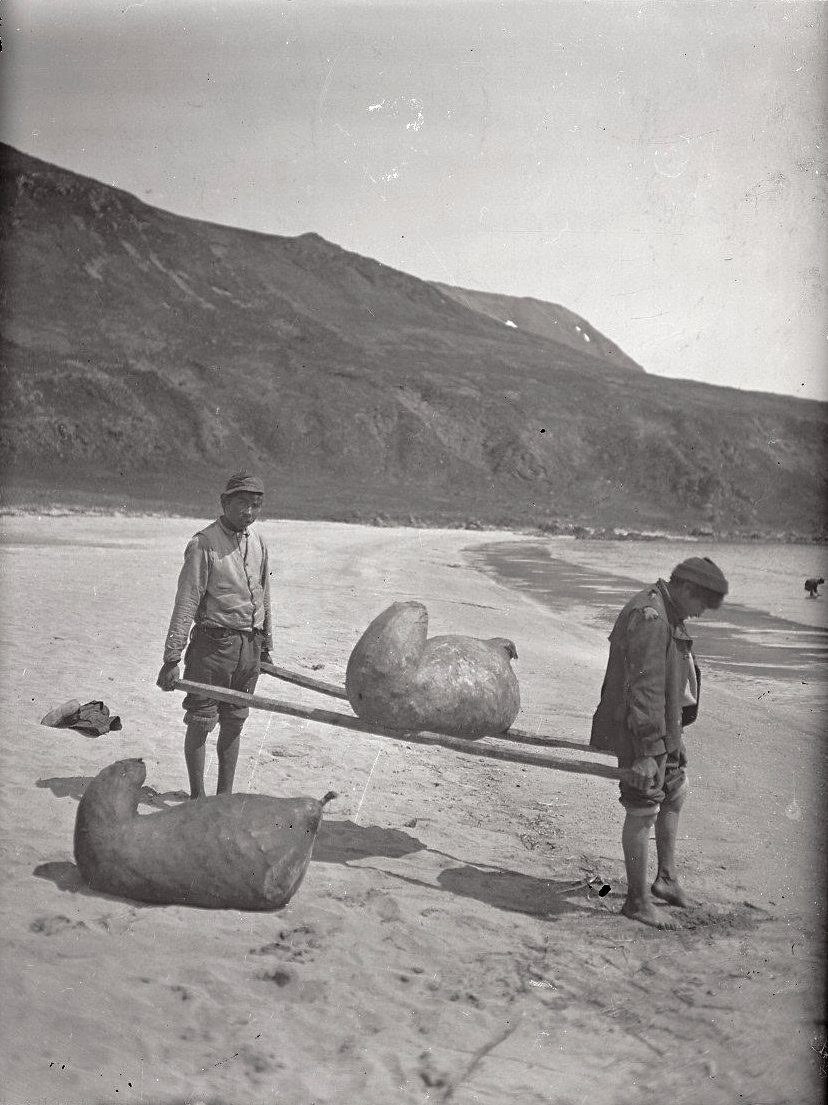 1909. Алеуты несут рыбу в сивучьих мешках. Атту остров