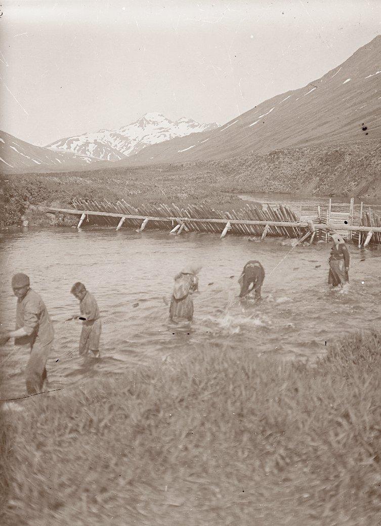 1909. Алеуты за ловлей рыбы неводом. Атту остров