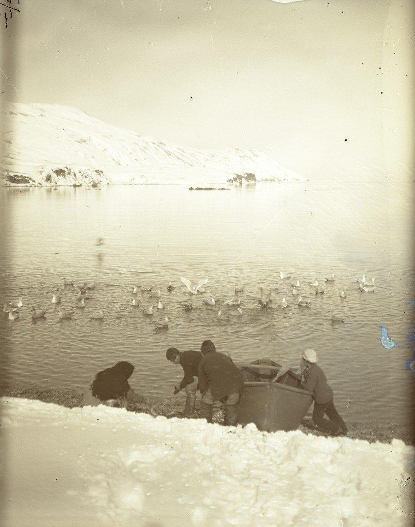 1909. 6 марта. Алеуты чистят рыбу. Алеутские острова, Амакнак.