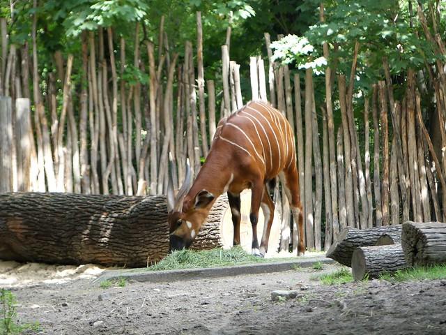 Zoo Berlin
