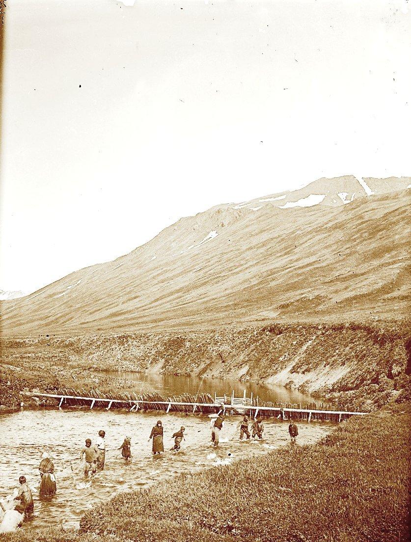 1909. 23 июля. Алеуты неводят рыбу. Атту остров