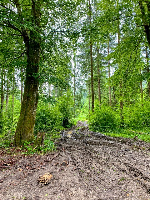 Muddy forest path in Rechenau near Kiefersfelden in Bavaria, Germany
