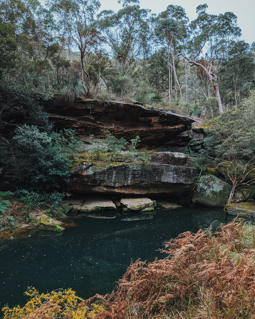 Come with me on a virtual loop through Berowra National Park, a real-life getaway from a world of screens and attention-grabbing apps like the one we're both looking at right now.