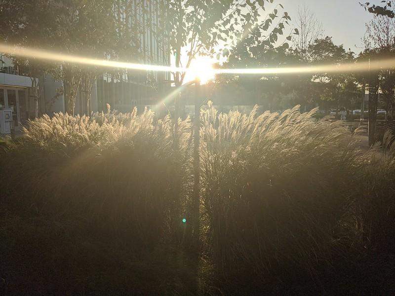 Late afternoon sunburst
