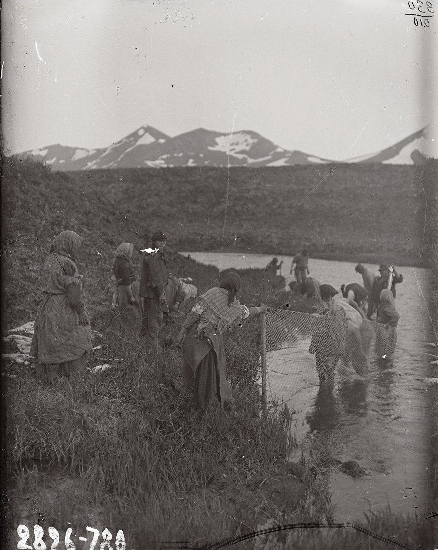 1909. 23 июля. Алеуты неводят рыбу. Атту остров.