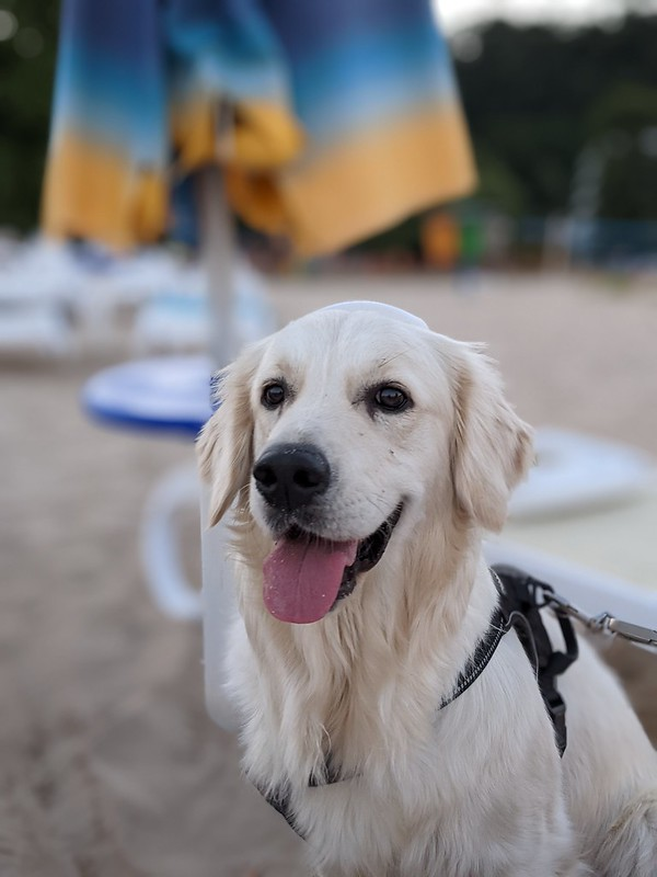 Dog happily sitting on the beach