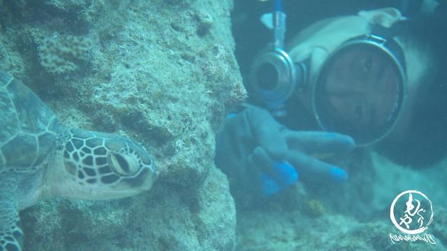 120mm相当ではこれ以上撮れませんww Hさんとおねむなアオウミガメさん